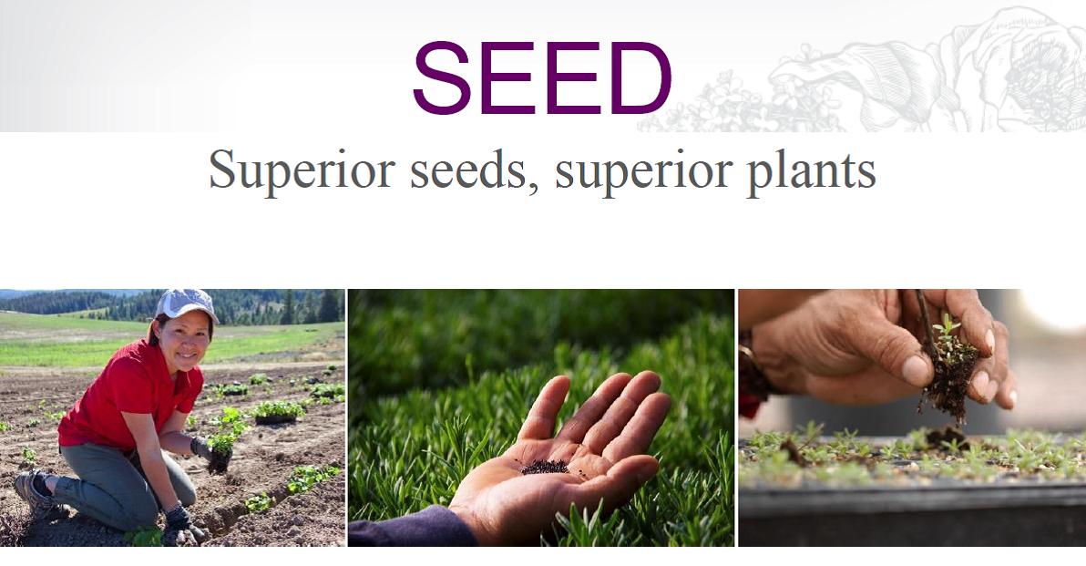 seed-3